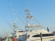 Chasin' Tail 7/11 on Blue Marlin. April, 22nd