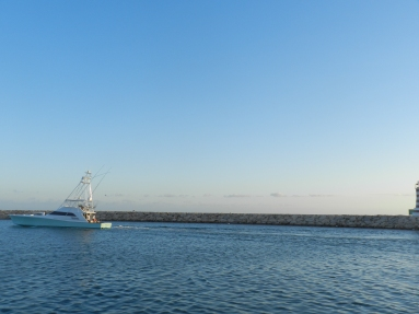 Alican 1 Blue Marlin release on April, 24th.
