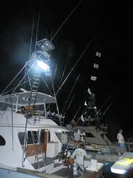 Bandolera released 7 Blue Marlin. 25 of April.
